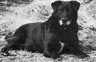 Pas Sv. Johna