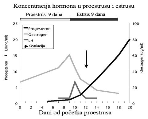 hormoni i parenje pasa