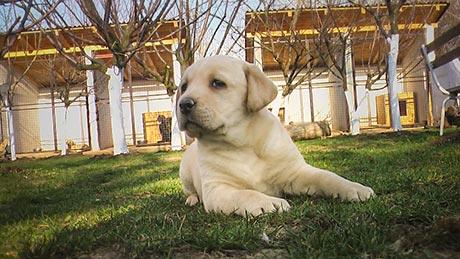 pas u dvoristu pansiona za pse
